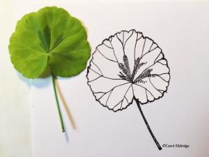 inked leaf